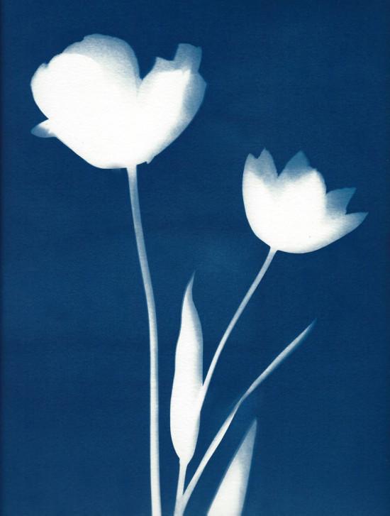 cyanotypes