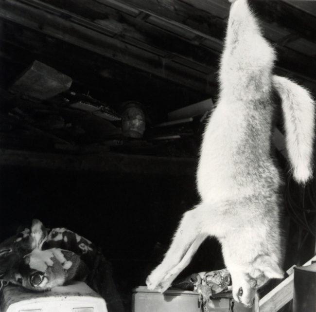 coyote & deerskins